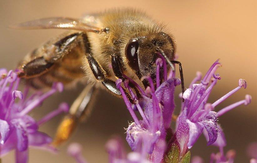 در مورد عسل گیاه آویشن چه می دانید؟دانید؟